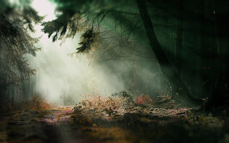 spooky-forest