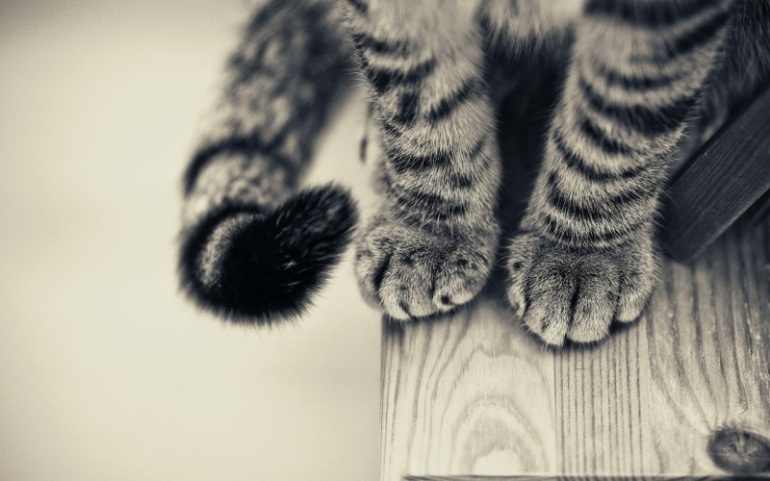 cat wallpaper 2
