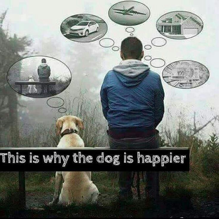 dogs are happier.jpg