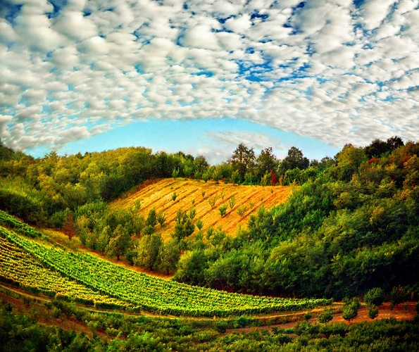 beautiful-fields-of-serbia.jpg