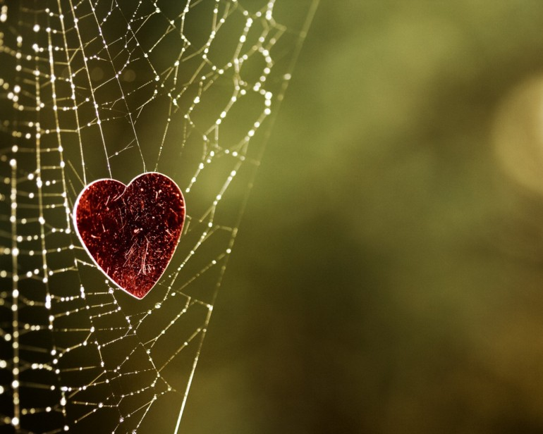 heart in web